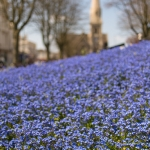 Palmeira Square in bloom