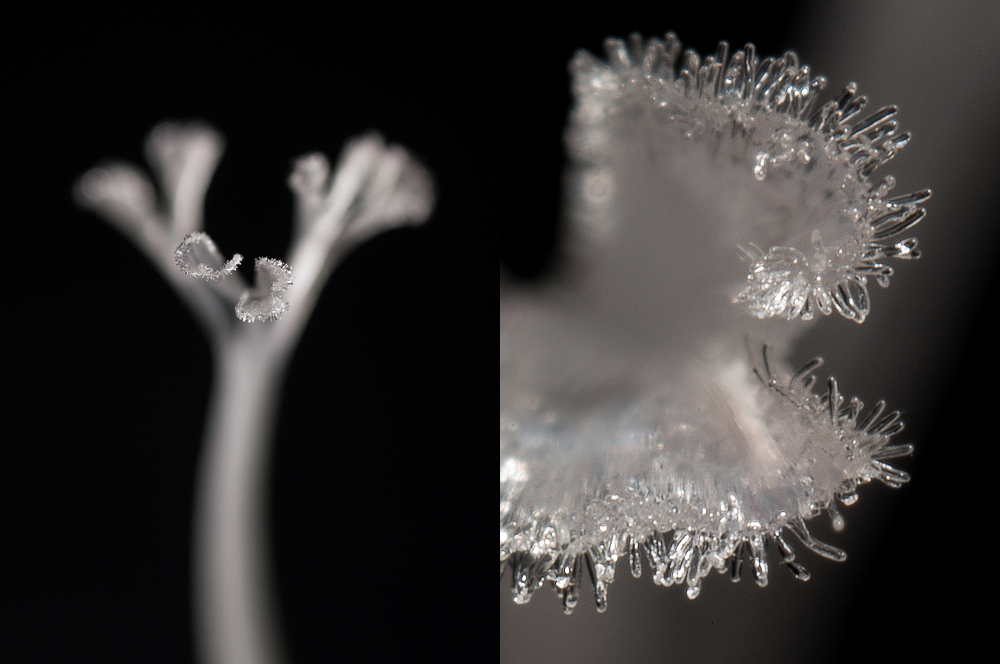 Beyond 1:1 - extreme magnification in macro photography, part III - bellows