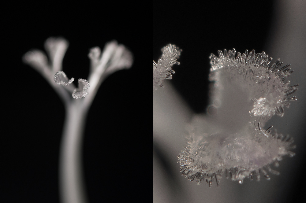 Beyond 1:1 - extreme magnification in macro photography, part IV - combining two lenses